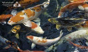 استفاده از آکواریوم و ماهی میتواند احساس آرامش و ثروت را به شما بدهد